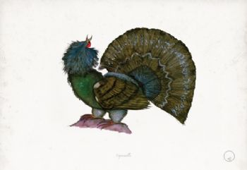 Capercaillie - artist signed print